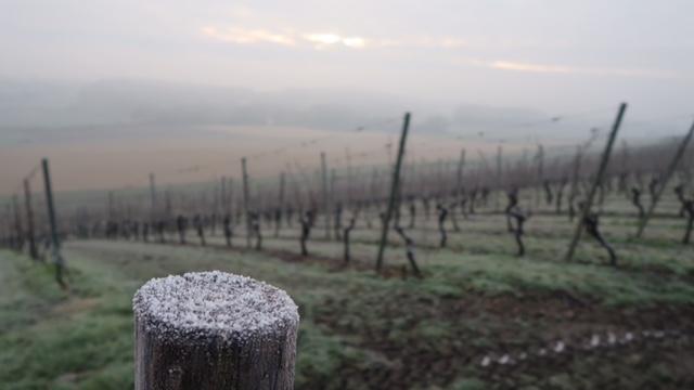 wijnwandeling, zuid-limburg